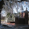 "Never To Yield Foundation opposes ""Sister Tree"" at Toomer's Corner"